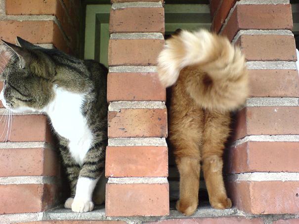 fotos-gatos-momento-justo-6