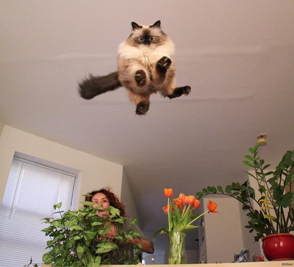 fotos-gatos-momento-justo-7