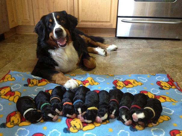 mamás-perro-orgullosas-11