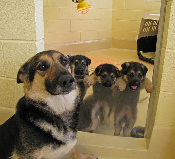 mamás-perro-orgullosas-2