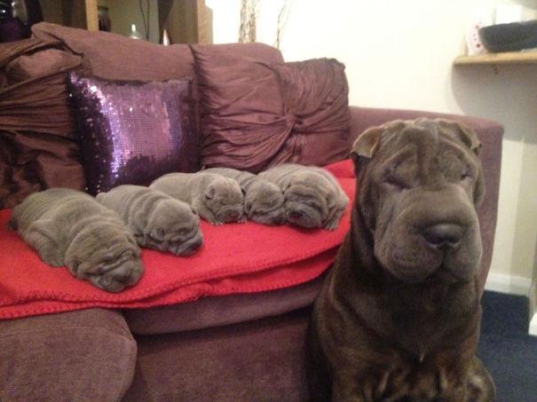 mamás-perro-orgullosas-45