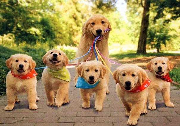 mamás-perro-orgullosas-47