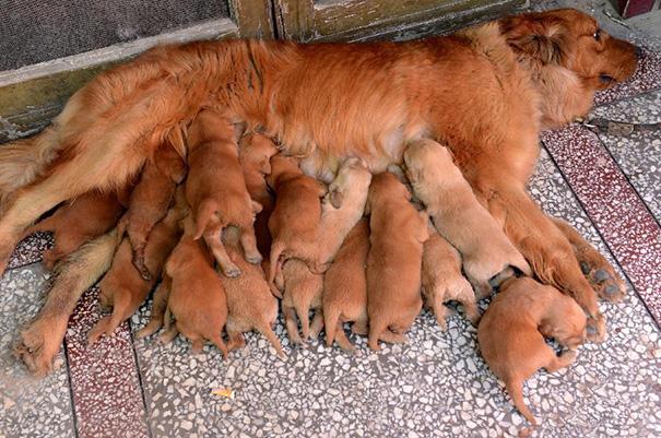 mamás-perro-orgullosas-5
