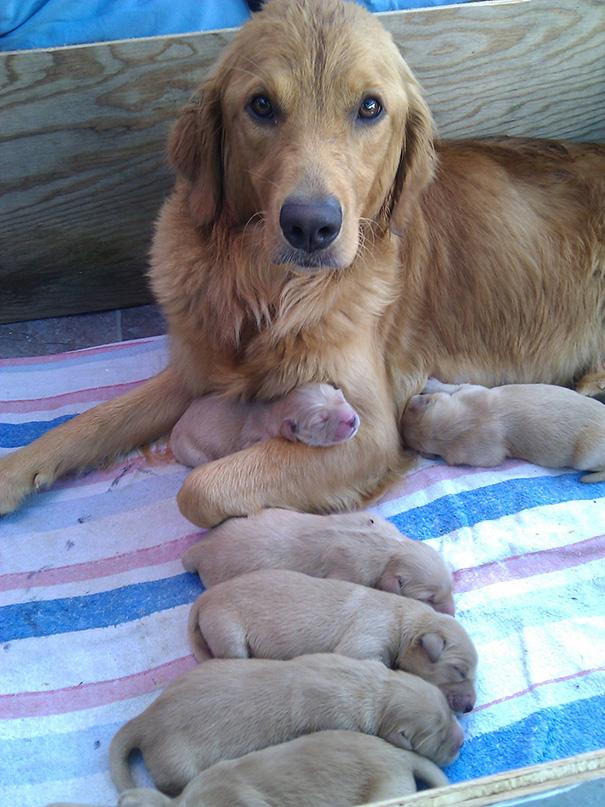 mamás-perro-orgullosas-6