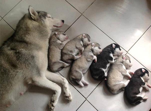mamás-perro-orgullosas-8