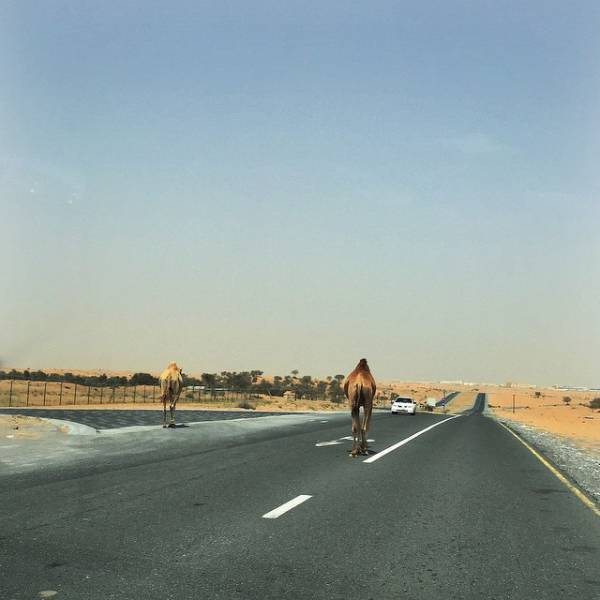 things_that_you_can_expect_to_see_only_in_dubai_640_28