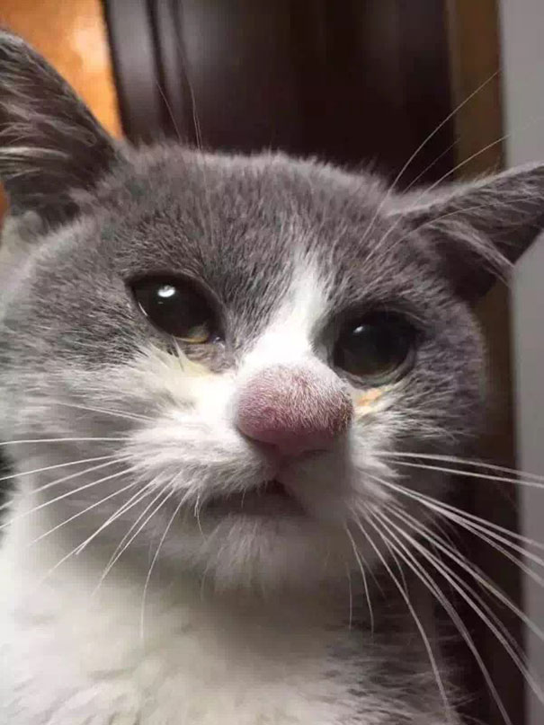 cat-bee-stings-104__605