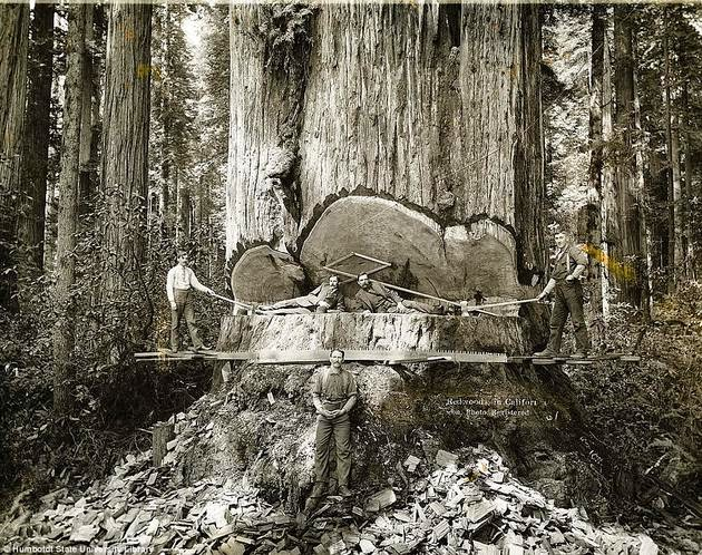 historical-photos-pt3-california-lumberjacks
