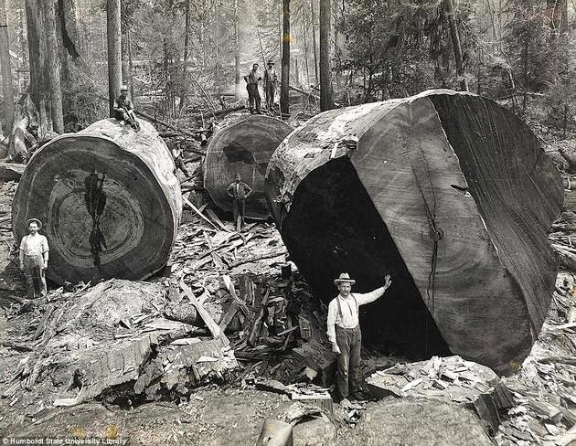 historical-photos-pt3-california-lumberjacks2