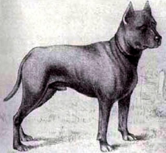 Razas de perros Extintas