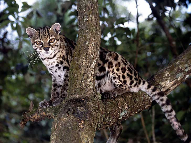 unusual-wild-cats-18-1