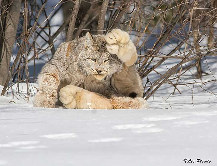unusual-wild-cats-221__880