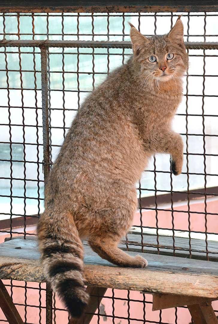 unusual-wild-cats-22__880
