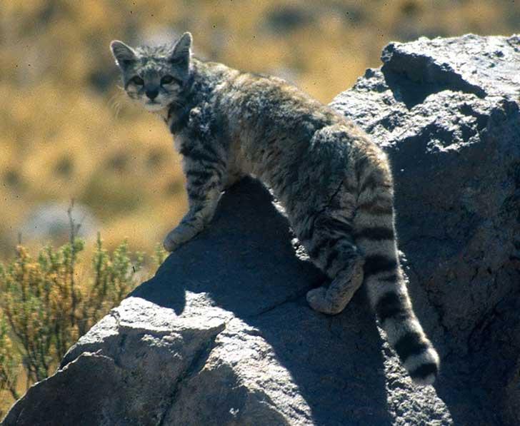 unusual-wild-cats-231__880