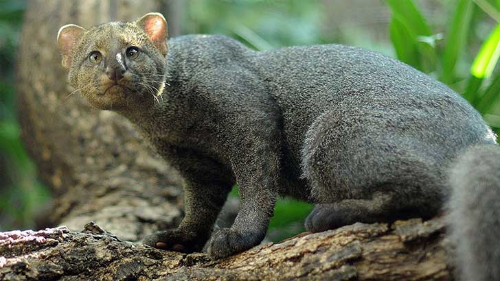 unusual-wild-cats-26__880