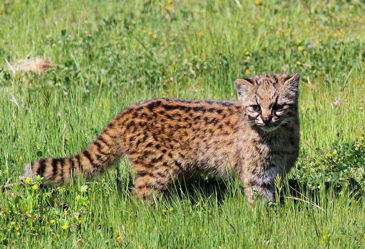 unusual-wild-cats-27__880