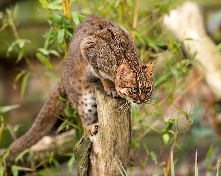 unusual-wild-cats-28__880