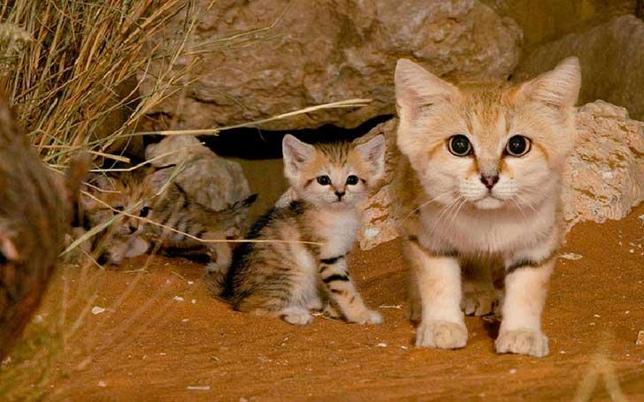 unusual-wild-cats-2__880