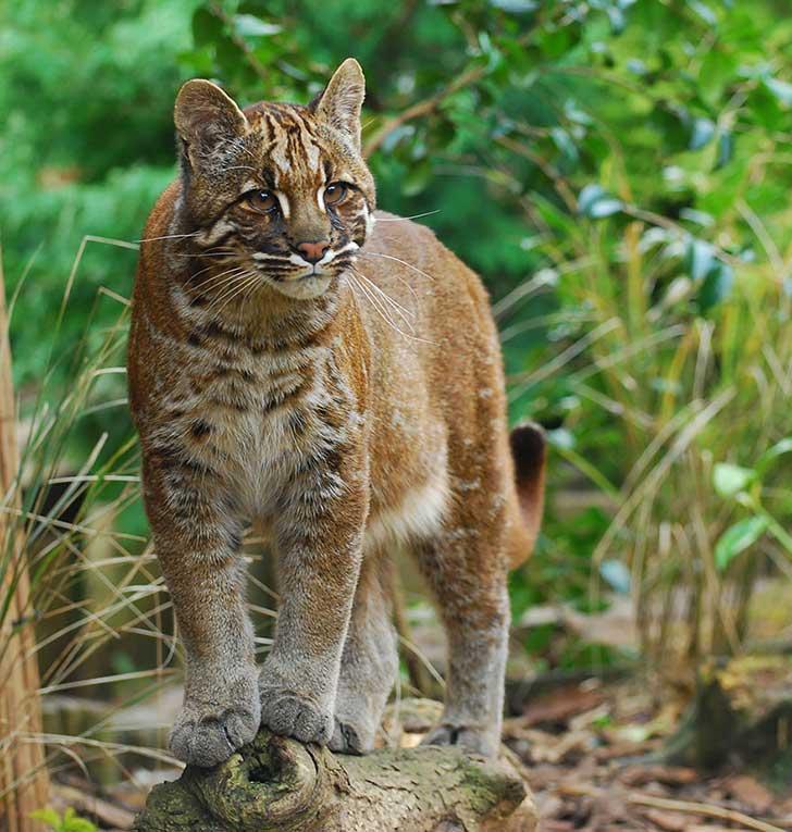 unusual-wild-cats-30__880