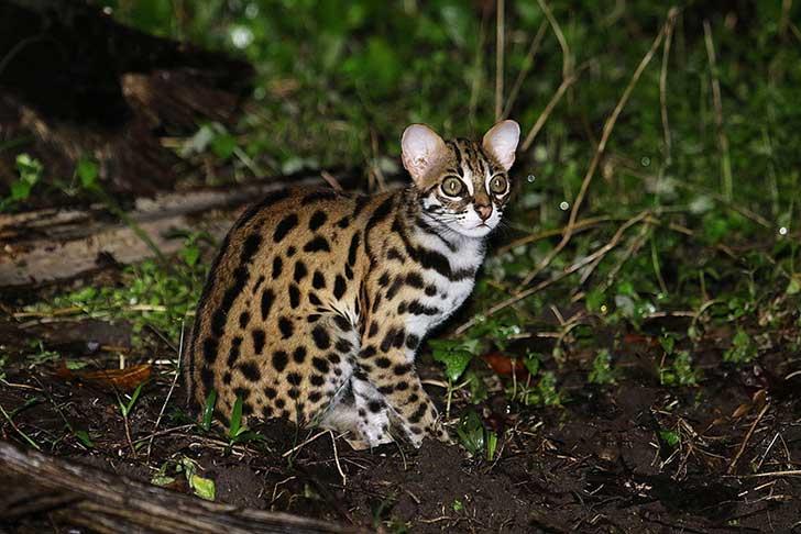 unusual-wild-cats-33__880