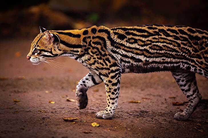 unusual-wild-cats-35__880