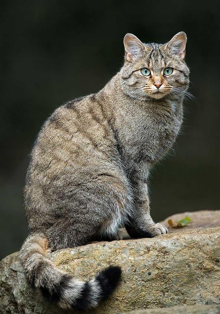 unusual-wild-cats-37__880