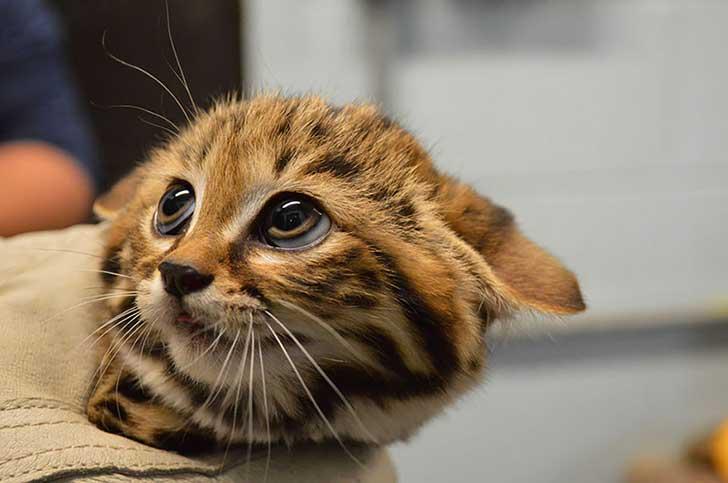 unusual-wild-cats-5__880