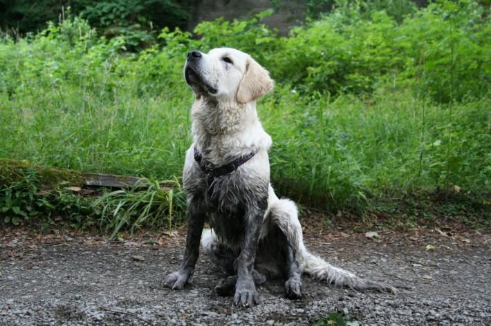wet_muddy_dog_pet_hair_on_car_seat-1024x6821-710x472