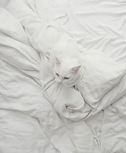 599105-650-1450173382-gatos-camuflados-31