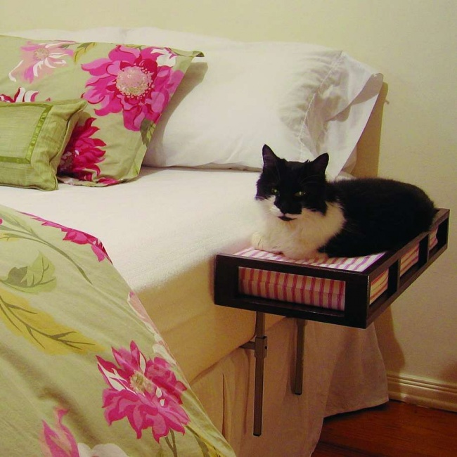 77055-650-1450662291-bunk-bed-couch-cat