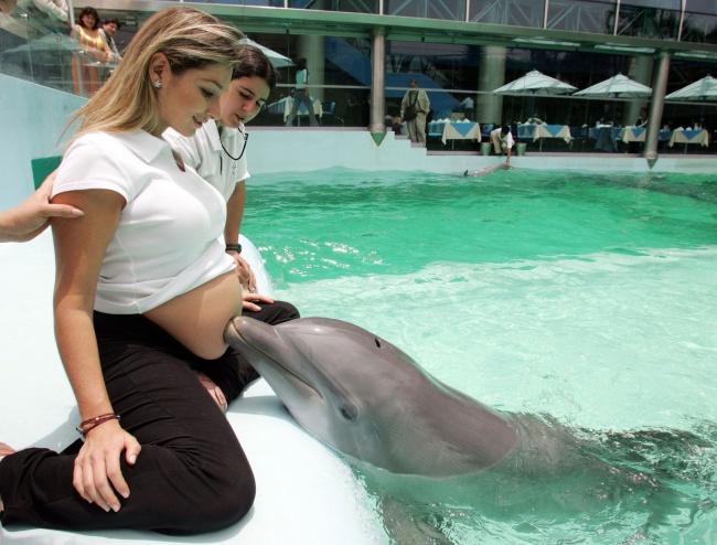 8890-R3L8T8D-650-dolphin