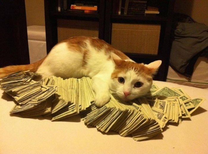 cat_and_bucks