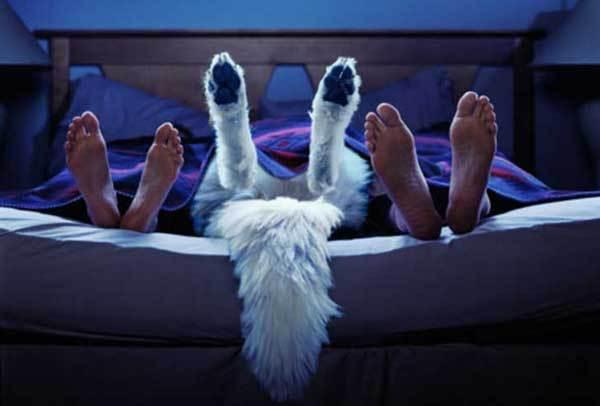dormir-perro-foto-2