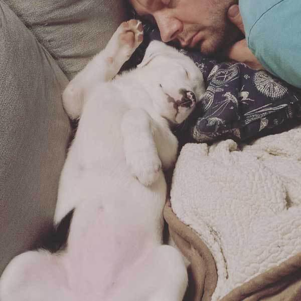dormir-perro-foto-3