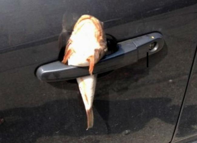 estacionaste-en-el-lugar-equivocado-332