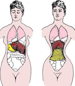 waist-training-organ-smushing-260x300