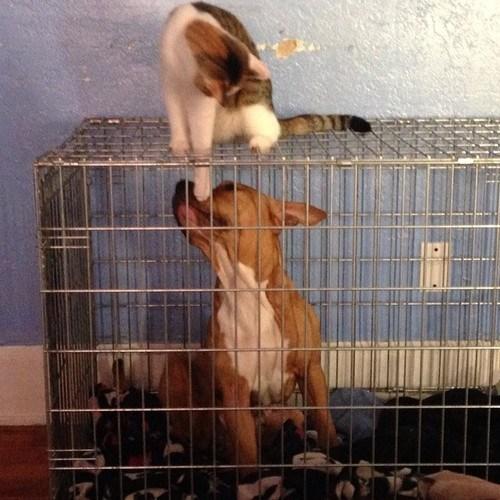 Animales-comportandose-como-cabroncetes-03