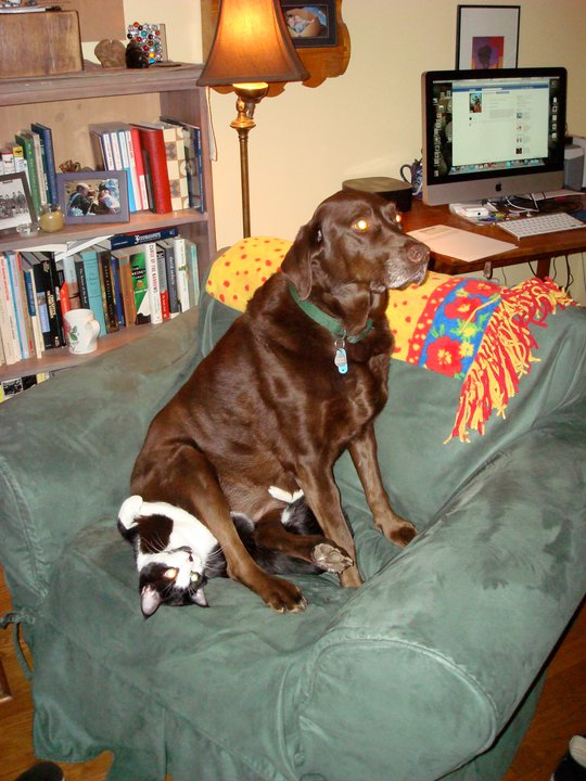 Animales-comportandose-como-cabroncetes-12