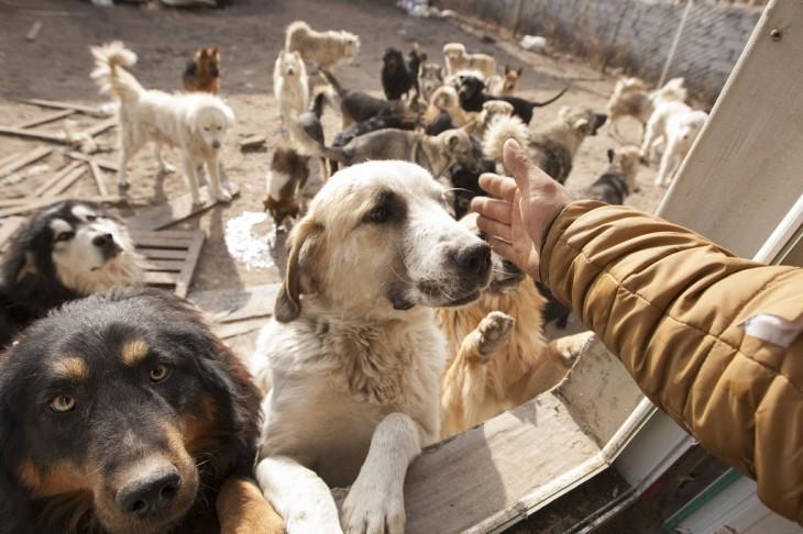 Millonario-Chino-rescata-perros-callejeros-2-730x486