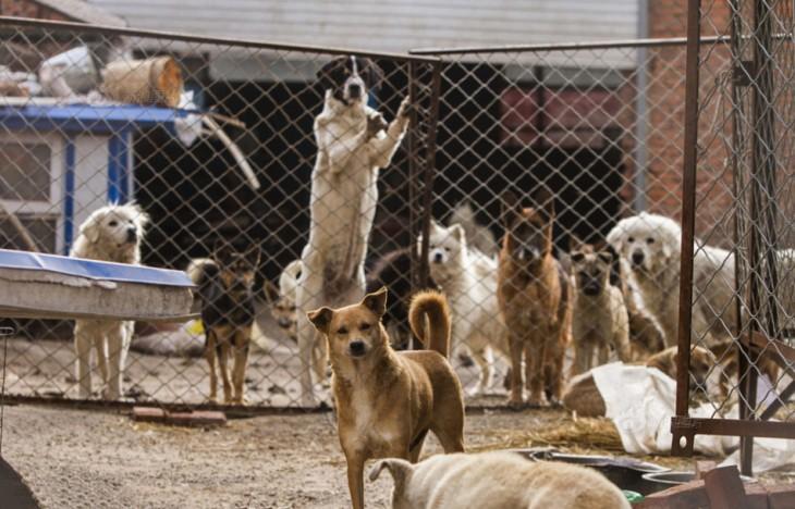 Millonario-Chino-rescata-perros-callejeros-4-730x468