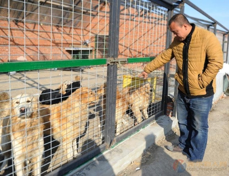 Millonario-Chino-rescata-perros-callejeros-6-730x560