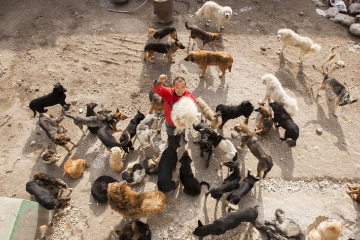 Millonario-Chino-rescata-perros-callejeros-7-730x487