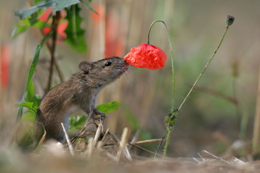 animals-smelling-flowers-151__880