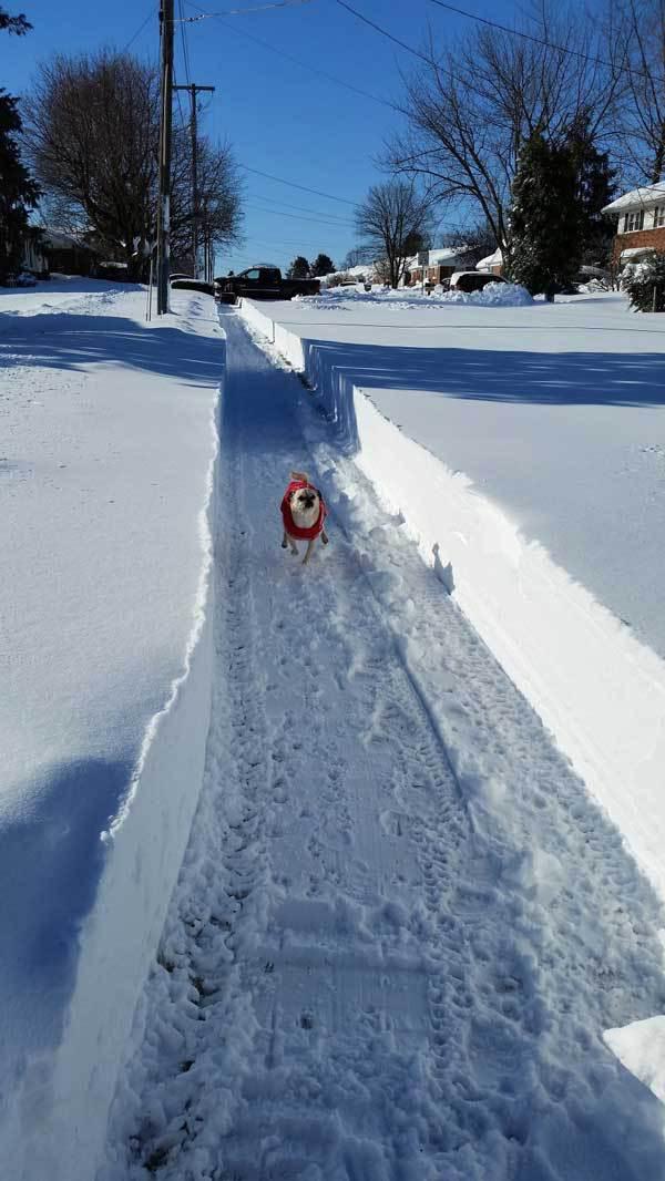 blizzard-2016-foto-15