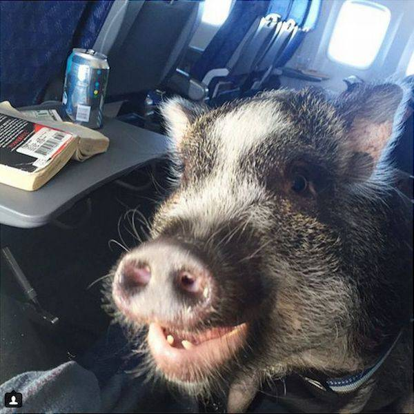 daily_picdump_2021_640_03