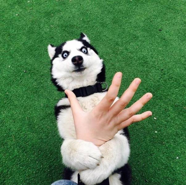 daily_picdump_2021_640_27