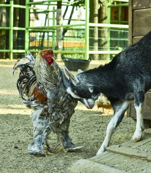 daily_picdump_2021_640_36