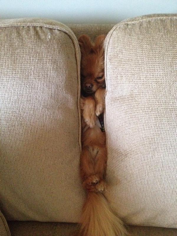 sleepdog10-w5nA