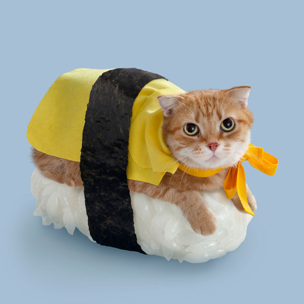 Sushi-Cats-New-Japanese-Eating-Fashion-4