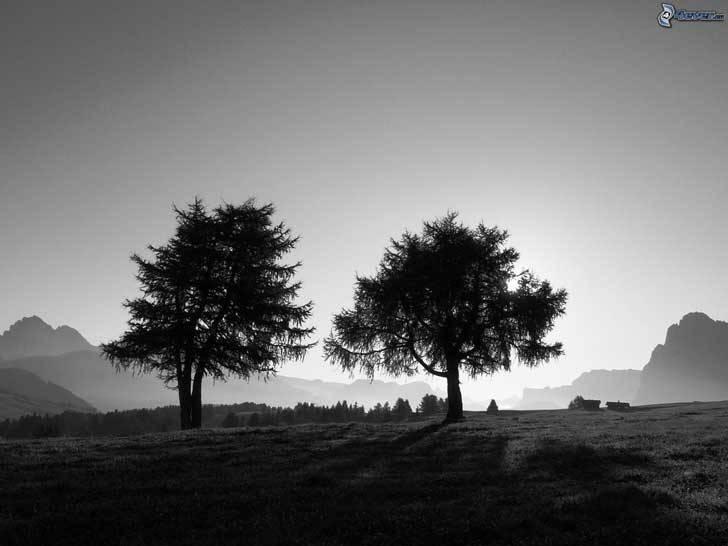 gemelas-pollock-foto-9